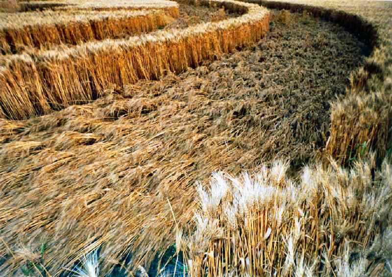 Barley flow